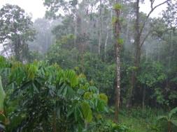 Rain_in_Tena